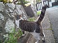 阿佐ヶ谷住宅の猫さん - panoramio.jpg