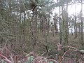 -2018-12-30 Woodland along side the Footpath to Northrepps from Crossdale Street.JPG