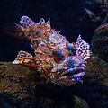 003 2014 03 16 Unterwasserfotografie.jpg