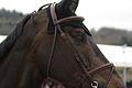 13-04-21-Horses-and-Dreams-Siegerehrung-DKB-Riders-Tour (37 von 46).jpg