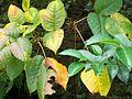 1461947 The-leaves-of-autumn 620.jpg