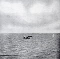 1906 Florida hurricane St. Lucia steamer.png