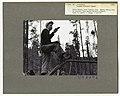 1950. Dave McComb. Mountain pine beetle control project. Targhee NF, ID. (33558252925).jpg