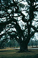 1981-12-Charleston Drayton Hall 008-ps.jpg