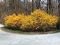 2007Englischer Garten.jpg