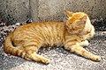 20090926 Kot w Suzhou 0630 5960.jpg