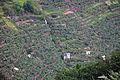 2010-03-04 12 44 00 Portugal-Pinheiro de Fora.jpg