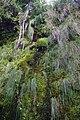 2012-10-26 15-32-17 Pentax JH (49283380031).jpg