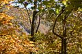 2012 Fall Color in the Chattahoochee National Forest (8113836535).jpg