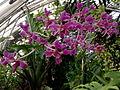 2012 kveten botanicka zahrada 078.jpg