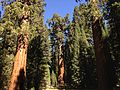 2013-09-20 11 12 01 General Sherman Tree.JPG