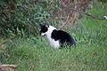 20141102- Black and White Cat by sebaso 08.jpg