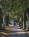 2014 Cmentarz w Kłodzku, główna aleja, 03.JPG