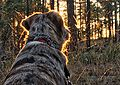 2016-366-289 A Radiant Dog (29722840124).jpg
