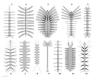 Lobopodia Group of extinct worm-like animals with legs