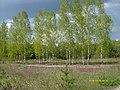 5 Брянский лес Номинация Природа Котова Мариша.jpg