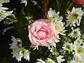 6272Flowers of the Philippines 04.jpg