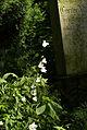 9841viki Cmentarz żydowski na Ślężnej. Foto Barbara Maliszewska.jpg