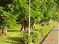 AIT - panoramio - Seksan Phonsuwan (50).jpg