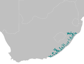 Maputaland-Pondoland bushland and thickets ecoregion