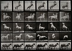 A horse prancing and couple of ponies walking. Photogravure Wellcome V0048756.jpg