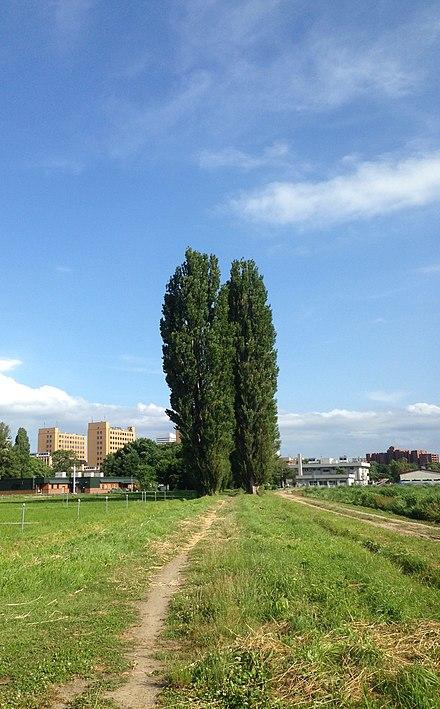 北海道大学 - Wikiwand