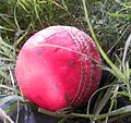 A used pink ball at the 2014 English county season launch in UAE.JPG