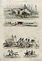 Above, a swineherd tending pigs and a herd of cows, below, p Wellcome V0020438.jpg