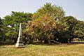 Acharya Jagadish Chandra Bose Indian Botanic Garden - Howrah 2011-01-08 9817.JPG