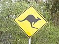 Achtung Kanguru (31412368841).jpg