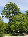 Admont - geschützter Landschaftsteil 1278 - Eichelau.jpg