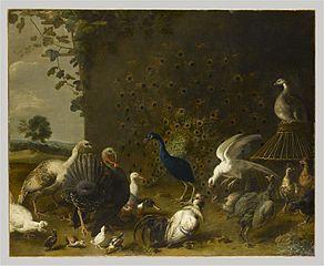 Barnyard Birds