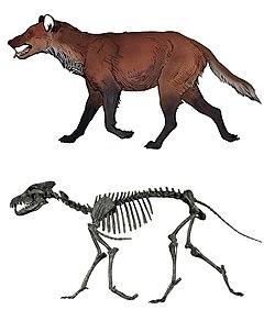 Aenocyon dirus restoration & skeleton.jpg
