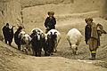 Afghan herder boys.jpg