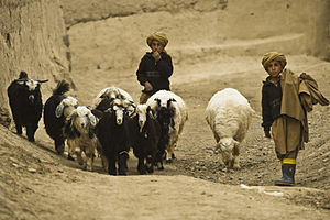 Afghan boys tend to their heard of sheep and g...