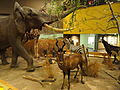 African display - Springfield Science Museum - Springfield, MA - DSC03354.JPG