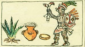 Aguamiel - From the Codex Borbonicus or Códice Borbónico (1530s Spanish calendar and outline of life in the New World) showing Mayahuel, goddess of the maguey, with a mature agave and a pot of fermented pulque. The first liquid that oozes into the heart of the maguey is aguamiel, believed to be Mayahuel's blood