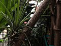 Air Plants Garden (260558097).jpeg