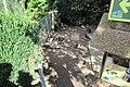 Aix galericulata, Branta ruficollis in Dierenpark Zie-ZOO.jpg