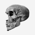 Akhenaten skull rotated profile.png