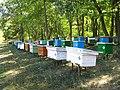 Albinarie in padure - panoramio.jpg