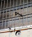 Alcatraz (22535465033).jpg