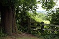 All Saints Church, Nazeing, Essex, England ~ churchyard west style 01.JPG