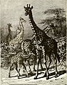 All about animals. Facts, stories and anecdotes (1900) (14778276875).jpg