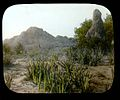 Aloe plants and ant hill (3948855456).jpg