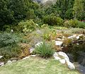 Aloe succotrina Fynbos aloe - Gardens of South Africa.JPG