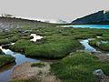 Alpine Bogs (4896490163).jpg