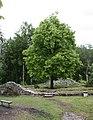 Alt Landenberg Burghof O.jpg