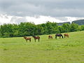 An equine line-up - geograph.org.uk - 177057.jpg