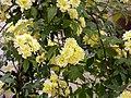 Angiosperms in iran گلها و گیاهان گلدار ایرانی 42.jpg